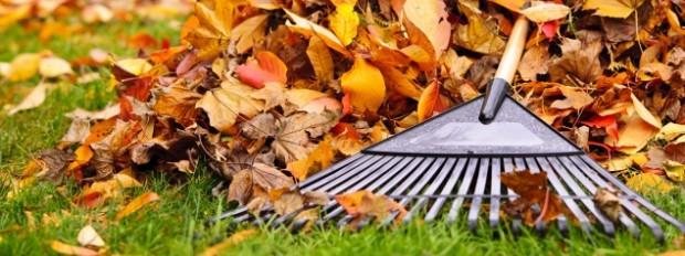 Грижа за райграса през есента
